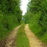 Angenehme Wanderwege